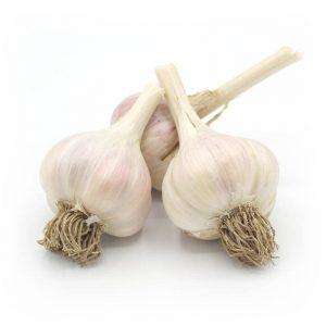 KMB Farms--Russian Giant Garlic (Bulbs)
