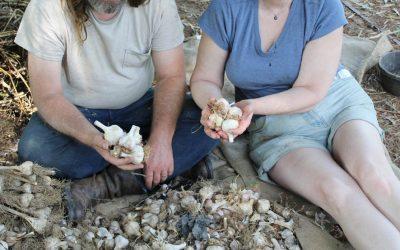 Do You Know Your Garlic?
